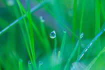 Dew drops on blades of grass von Intensivelight Panorama-Edition