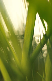 Grass abstract by Intensivelight Panorama-Edition