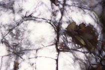 Autumn twigs - abstract by Intensivelight Panorama-Edition