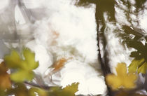 Blurry autumn leaves von Intensivelight Panorama-Edition