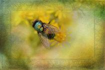 Sonnenbadende Fliege von Silvia Streit