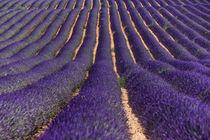 Lavendelfeld von Jürgen Feuerer