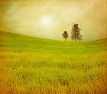 Trees in a shinning field von Viviana González