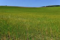 Grüne Hügel von Jürgen Feuerer