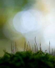 Moss von Maria Inden