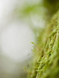 Dream of moss von Maria Inden