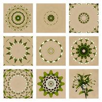 Kirschbluete-collage
