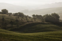 Tuscany - Olives by Alex Fechner