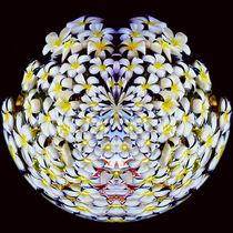 Frangipani - Sphere by Tyrone Castelanelli