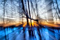 Sonnenschein im Winterwald by fraenks