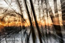 Winterwald by fraenks