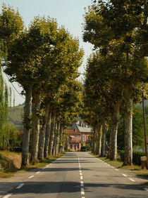 French country road by Philip Shone