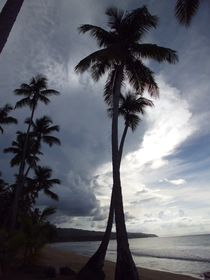 Palms touching the sky, Dominican Republic by Tricia Rabanal
