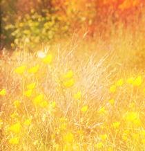 Herbstfarben von Bastian  Kienitz