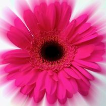 Pink Fizz von Susie Hawkins