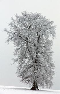 Eiskönigin by Wolfgang Dufner