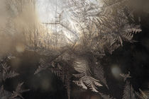 Forest at sunset seen through frost covered window by Intensivelight Panorama-Edition
