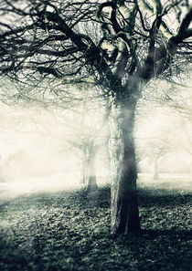 Trees in the Mist by Sybille Sterk