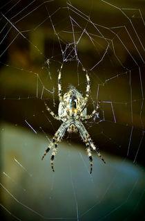 Spinne im Netz von Gina Koch