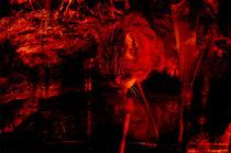 im Rotlicht  von Barbara  Schreiber