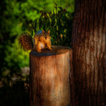 Balboa Park Squirrel von Chris Lord