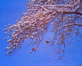 Cardinaltree
