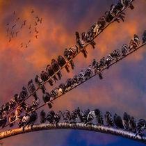 Pigeongangs