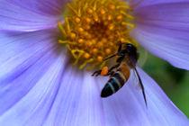 Bee by Hemantha Arunasiri