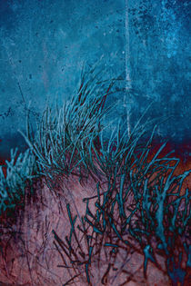 Grass Abstract by David Pringle