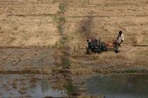 Farmer by Hemantha Arunasiri