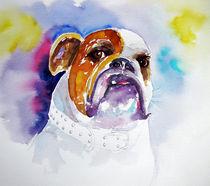 Bulldogge by acrylics