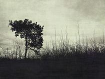 Landscape von Anne Staub