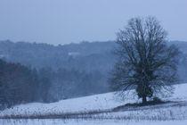 Winter Tale von linconnu