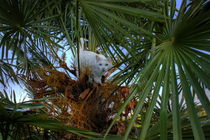 Cat Palm by linconnu