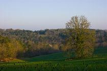 Spring Tale von linconnu