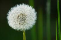 Green Pollen