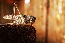 Grasshopper von Irina Visanu