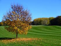 Bäumchen auf dem Golfplatz von Margarita Moerth