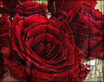 Love Roses by rosanna zavanaiu