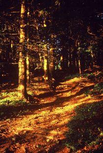 Goldener Wald von Ulrike Ilse Brück