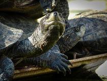 Turtles in front of the Angurukaramulla Temple by Inez Wijker