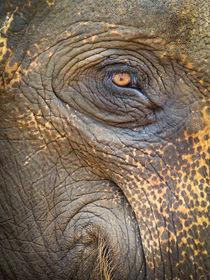 Close-up Elephant eye von Inez Wijker