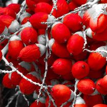 Manila Palm Red von Inez Wijker