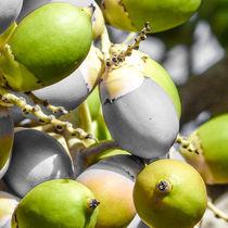 Manila Palm Green von Inez Wijker
