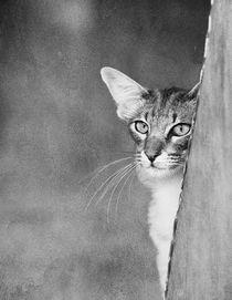 Katzenblick / 5 von Heidi Bollich