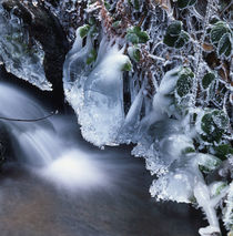 Cascade and frosty leaves von Intensivelight Panorama-Edition