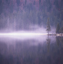 Mist rising from a lake by Intensivelight Panorama-Edition