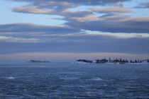 Icy ocean bay von Intensivelight Panorama-Edition