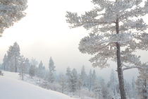 White winter forest by Intensivelight Panorama-Edition