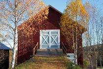 Autumn birches and red barn von Intensivelight Panorama-Edition